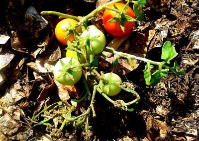 Inner City Gardening