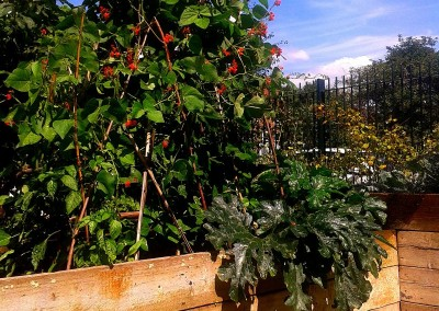 Gardening Deptford SE8